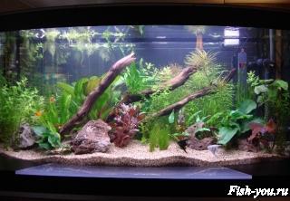 Аквариумные растения аквариумные